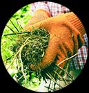 inspect garden weeds
