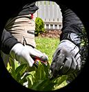 Garden Maintenance Balwyn